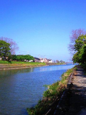琵琶湖・稚鮎のポイント