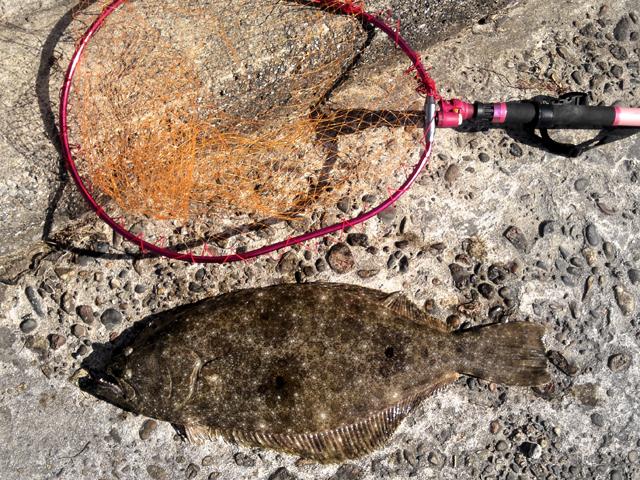 ヒラメ 68cm