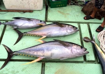久米島の釣果