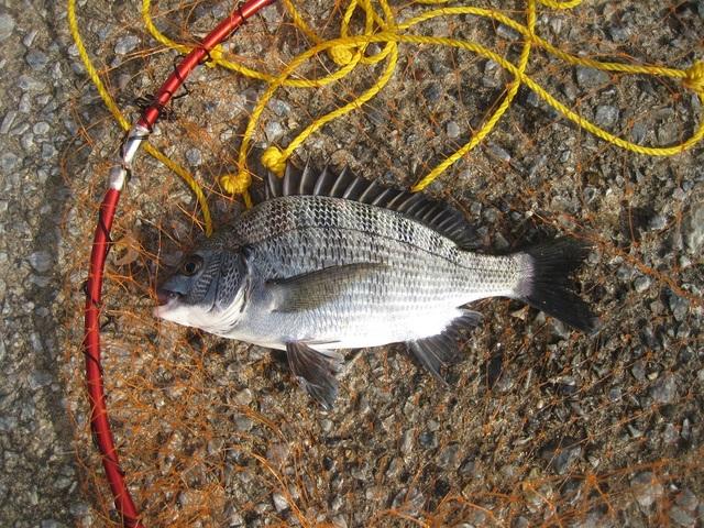 今秋、釣り再開で